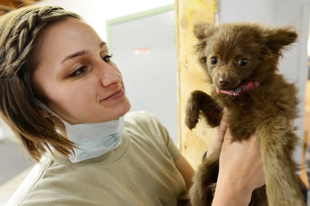 В Калининграде появился первый компьютерный томограф для животных
